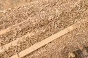 Researchers find way to turn sawdust into gasoline