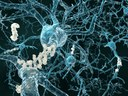 Potential new avenues for early intervention in Alzheimer's
