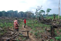Fighting deforestation: why are Congolese farmers clearing forest?